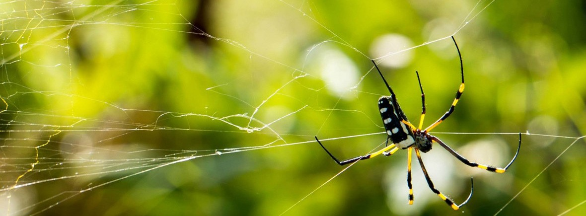 spider-network-cobweb-close-nature-pb-229958-DonCharisma-1180x483